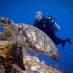 buceo copia Dive Pictures with New Wave Scuba