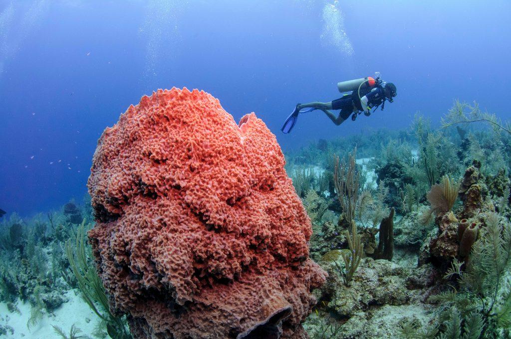 Belize Deep