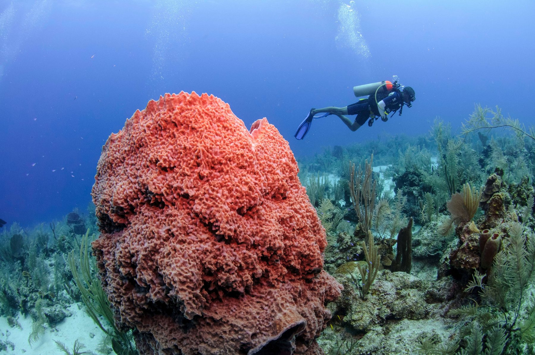 SunBreeze Hotel in Belize Ambergris Caye